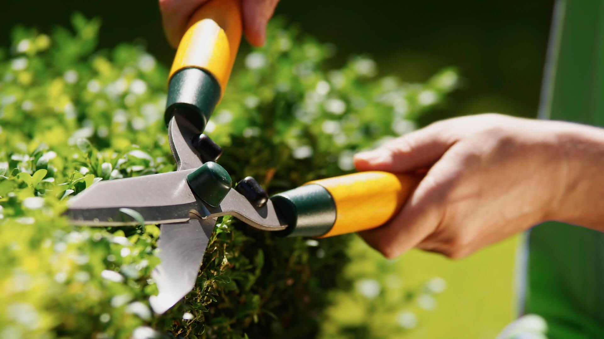 Pflege der Grünanlagen mit Gartenschere